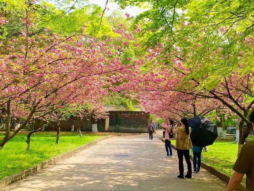 10、云南大學 云南本就是一個風景秀麗的地方,鳥語花香自是春天風景的常態。位于春城昆明的云南大學兼具詩情畫意與歷史滄桑。有著幾百年歷史的建筑、歲月長久的古樹、不知名的奇珍異草,不像熱門景點的擁擠,云大獨有一份寧靜的風景。